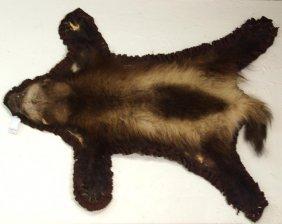 Large Alaskan Badger Specimen With Felt