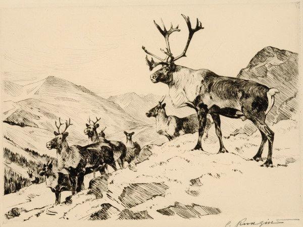 3: Mountain Caribou