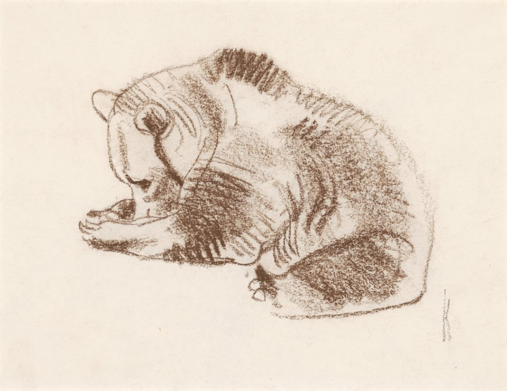 1B: Grizzly Bear, (Bidder's Choice)