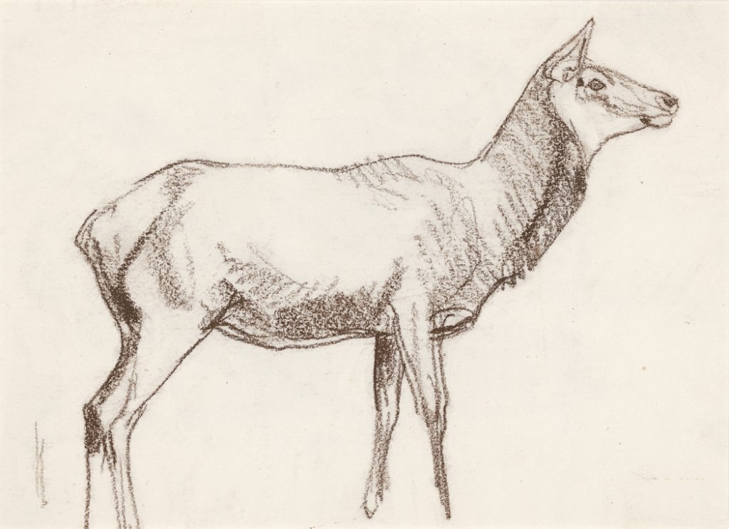 1C: Cow Elk, (Bidder's Choice)