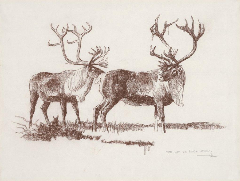 2: Caribou Pair,