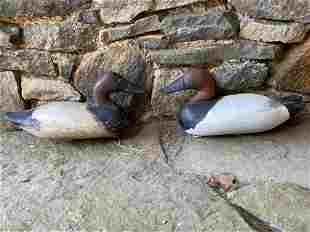 Two Carved and Painted Canvasback Decoys