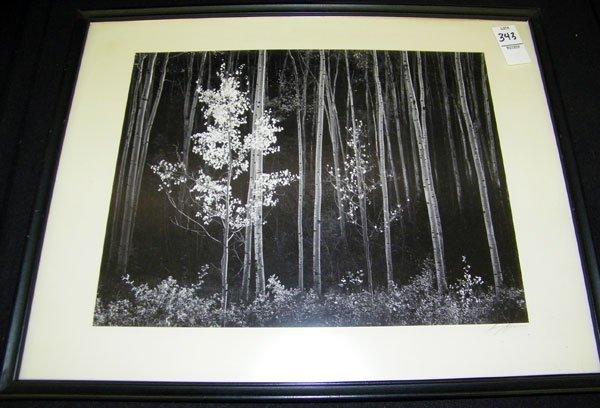 198: Ansel Adams, Photograph
