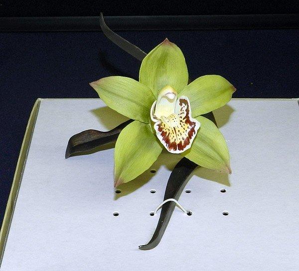 Boehm Porcelain Orchid