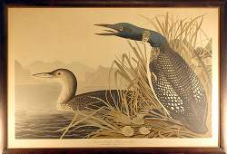 Engraving with Etching, after John James Audubon