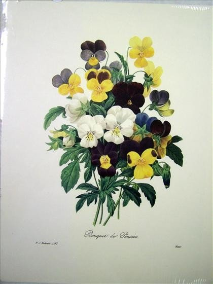 1244: Bouquet Of Pansies By P. J. Redoute