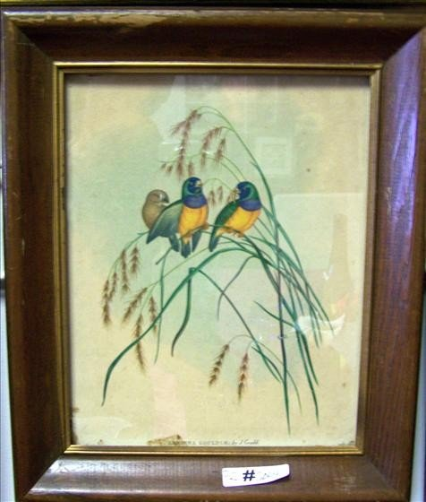 5004: Picture - J Gould print of birds
