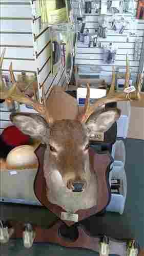 8 Point Deer Head Mount