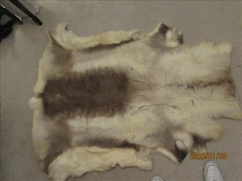 """Caribou Skin Rug 56"""" x 49"""" Excellent Condition"""