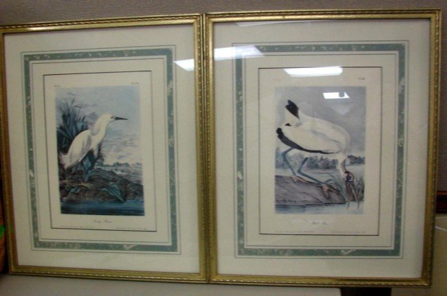 14: Pair of Audubon prints Snowy Heron & Wood Ibis