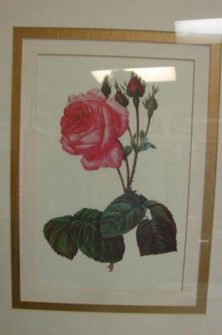 7: 2 Prints of Roses Matted & Framed in Wood