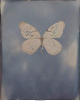 77113: Adam Fuss (b. 1961) Untitled, 2009 Daguerreotype