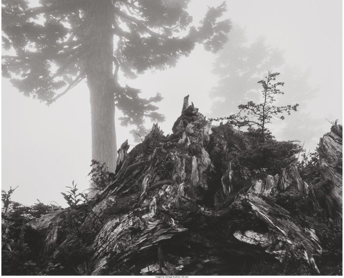 11004: Ansel Adams (American, 1902-1984) Tree, Stump an