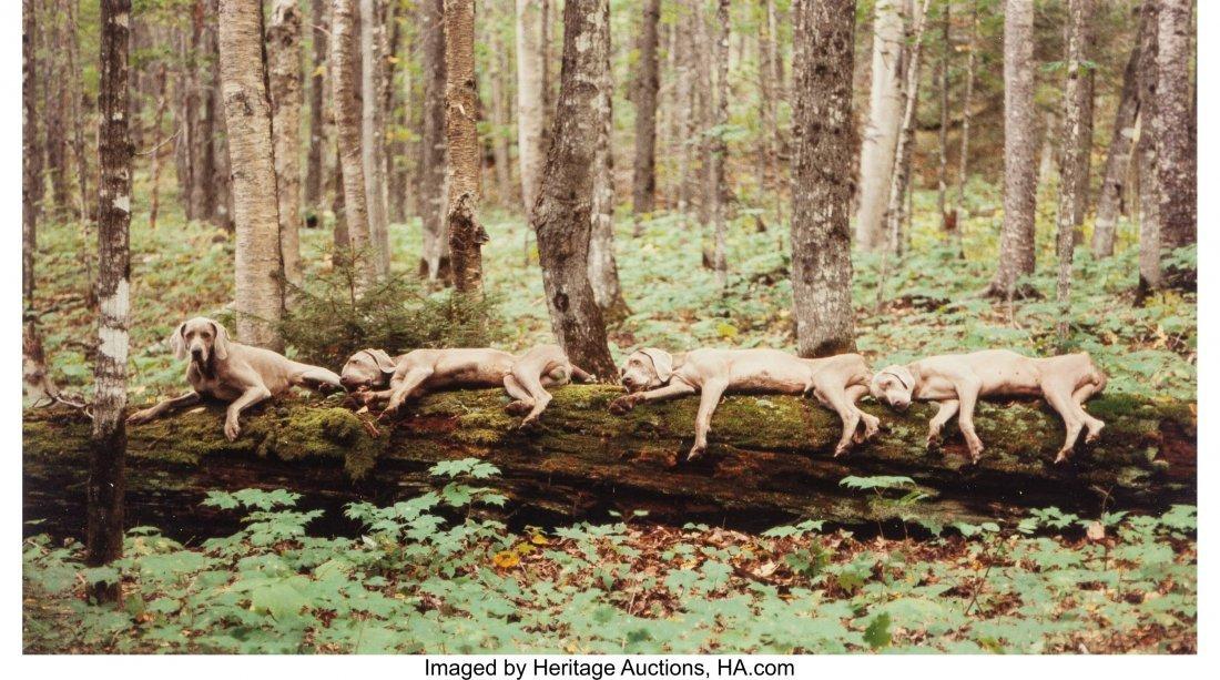 13154: William Wegman (American, b. 1943) Resting Reind