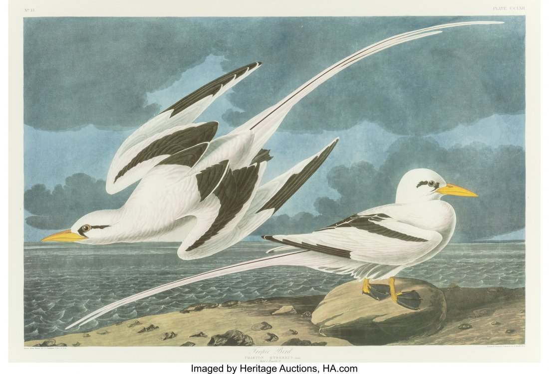 63772: After John James Audubon (American, 1785-1851) T