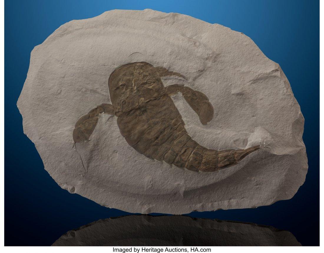 "72096: Fossil ""Sea Scorpion"" Plate Eurypterus remipes S"