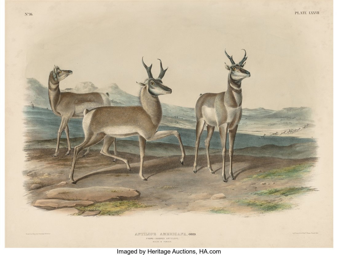 63838: After John James Audubon (American, 1785-1851) A