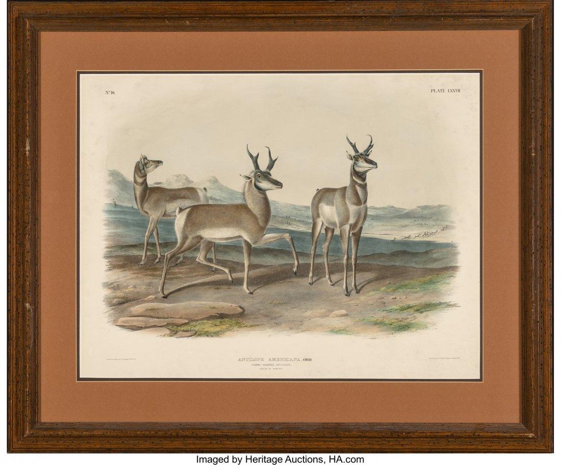 63838: After John James Audubon (American, 1785-1851) A - 2