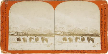 43474: Keystone View Company Stereoview of Canadian Buf
