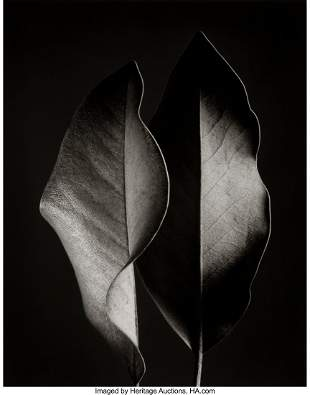 73005: Ruth Bernhard (American, 1905-2006) Two Leaves,