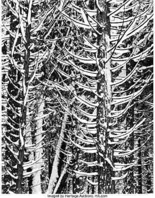 38006: Ansel Adams (American, 1902-1984) Forest Detail,