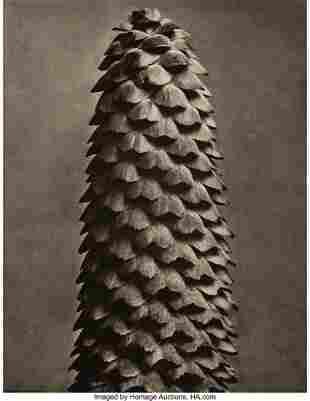 38013: Karl Blossfeldt (German, 1865-1932) Group of 20