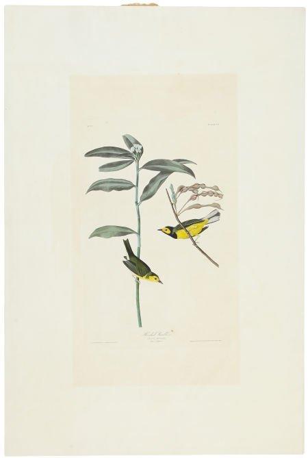 John James Audubon (1785-1851). Hooded Warbler - Plate