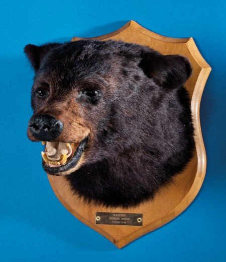 49112: BLACK BEAR SHOULDER MOUNT