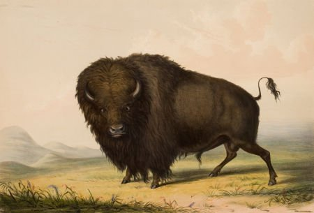 70001: GEORGE CATLIN (American, 1796-1872) North Americ