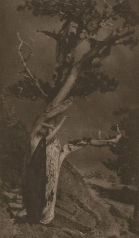74008: ANNE BRIGMAN (American, 1869-1950) The Dying Ced