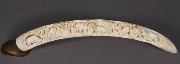 2: Ivory Tusk Carved with Water Buffalo, Indian 20th C.