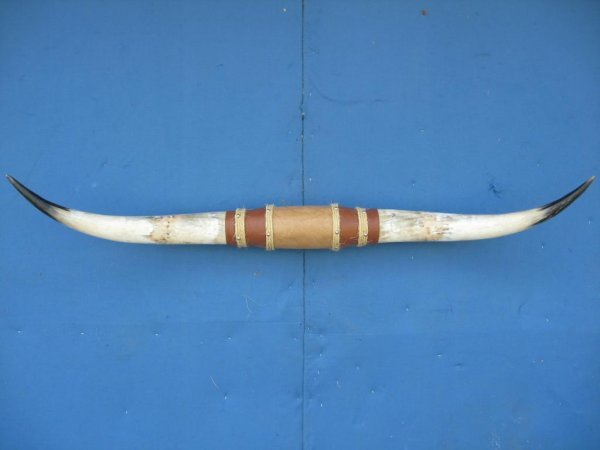 27A: Large Pair of Mounted Steerhorns
