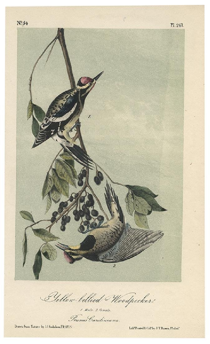 Audubon, John James. A Collection of Color Lithograph