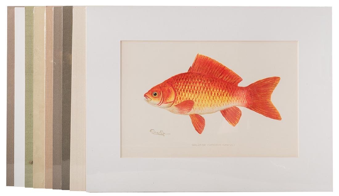 Group of Ten Denton Fish Prints.