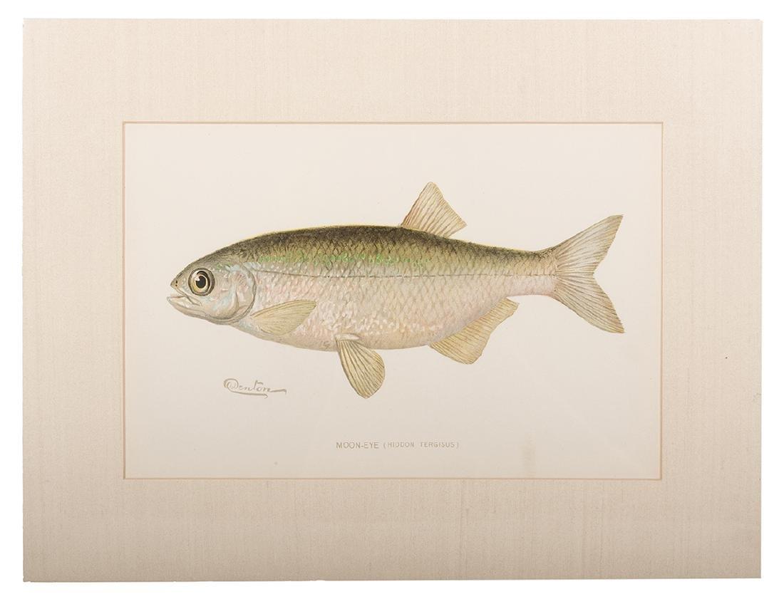 Group of Ten Denton Fish Prints. - 2