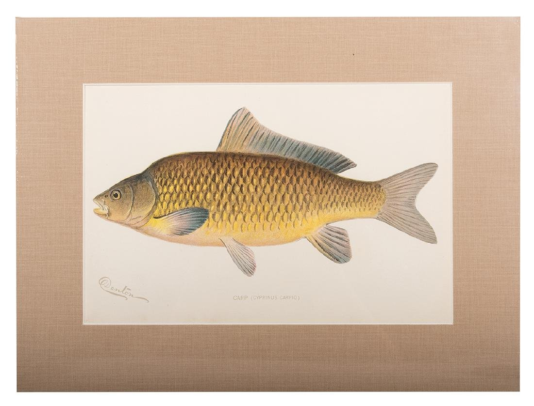 Group of Ten Denton Fish Prints. - 3