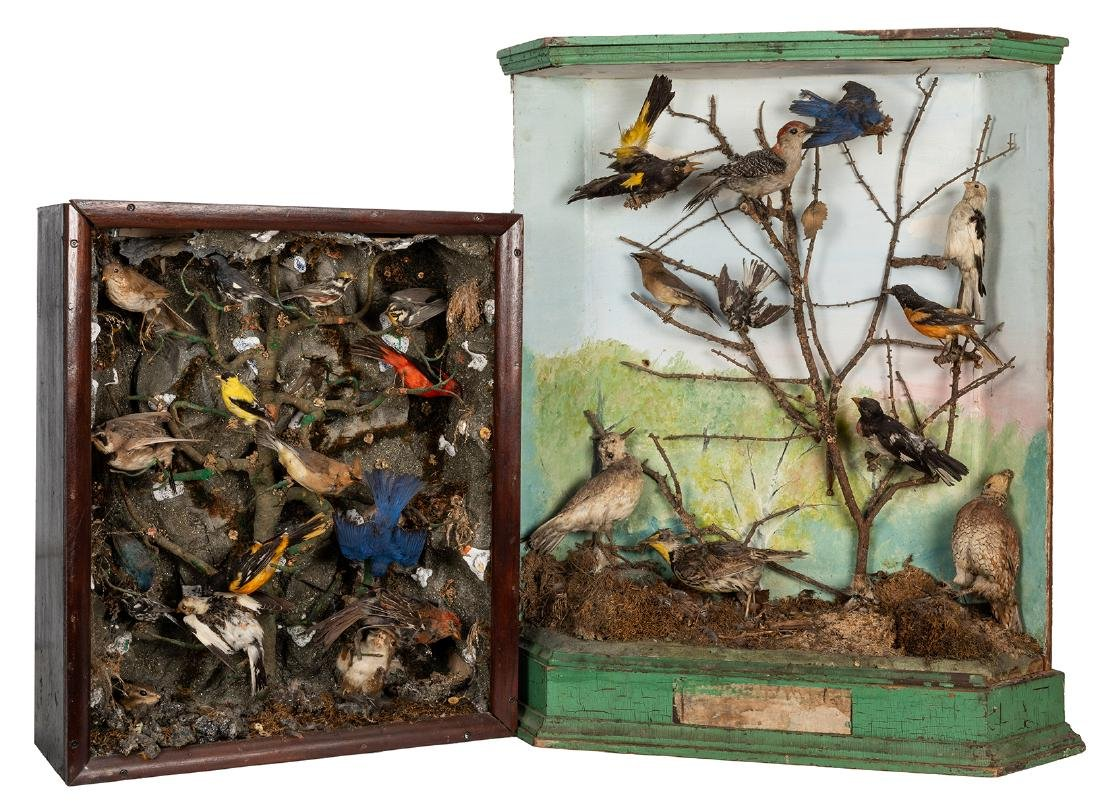 Two Large Victorian-Era Bird Dioramas.