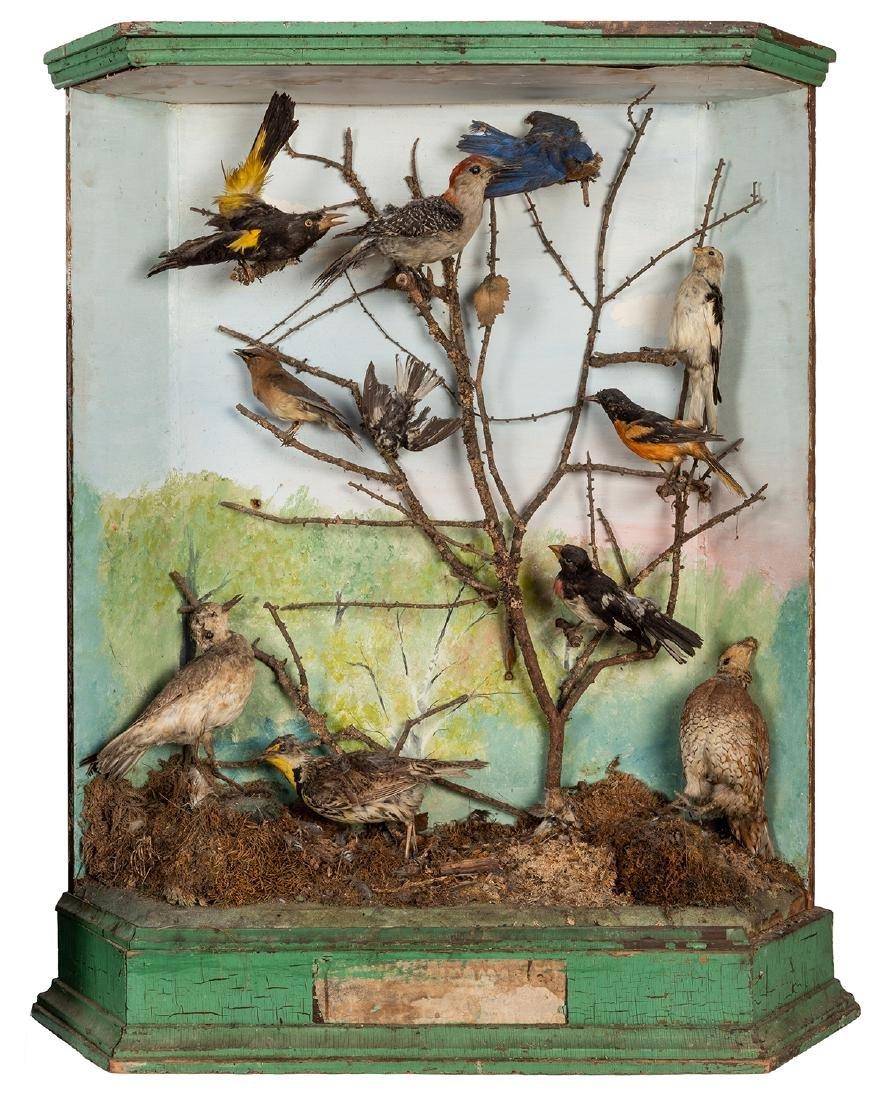 Two Large Victorian-Era Bird Dioramas. - 2