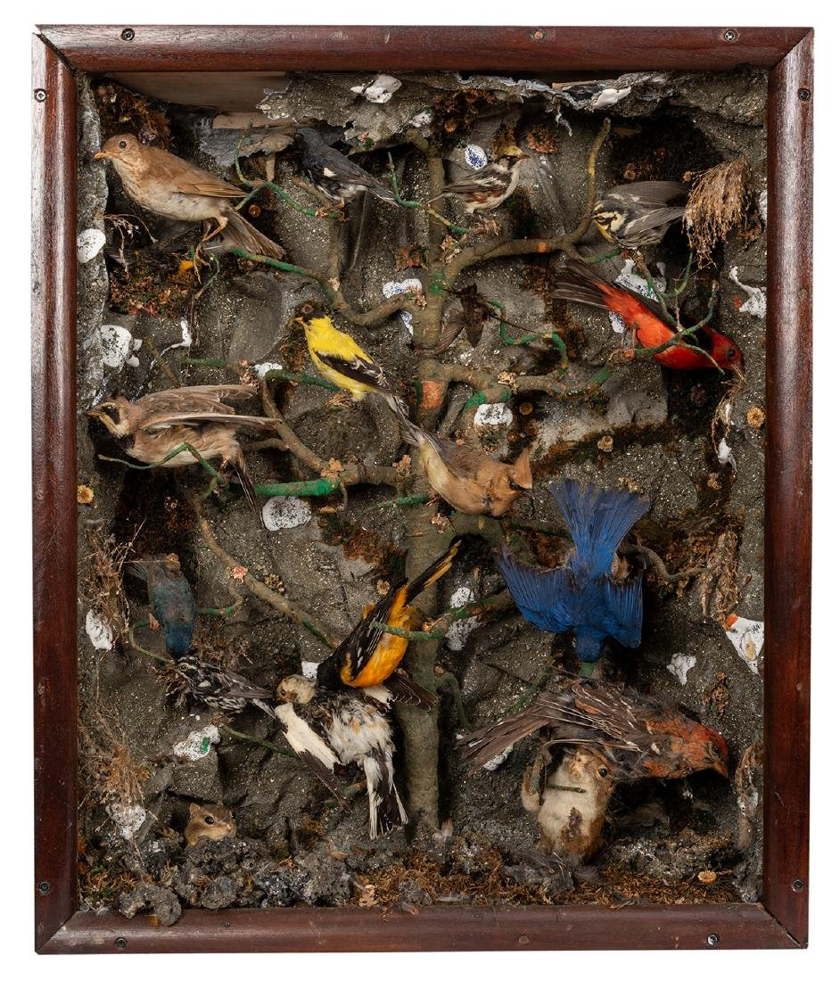 Two Large Victorian-Era Bird Dioramas. - 3