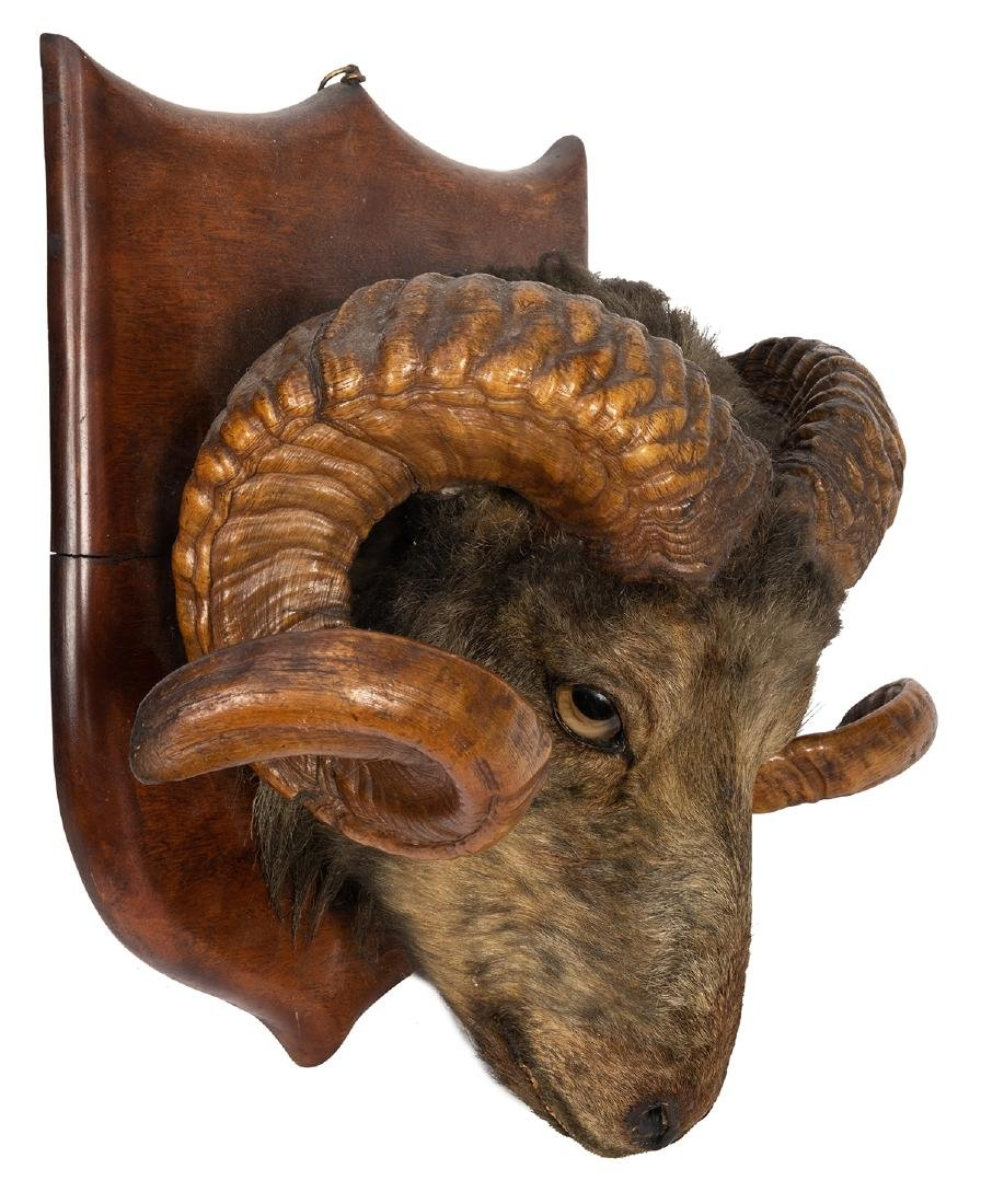 Antique Ram / Sheep Head Taxidermy Mount.
