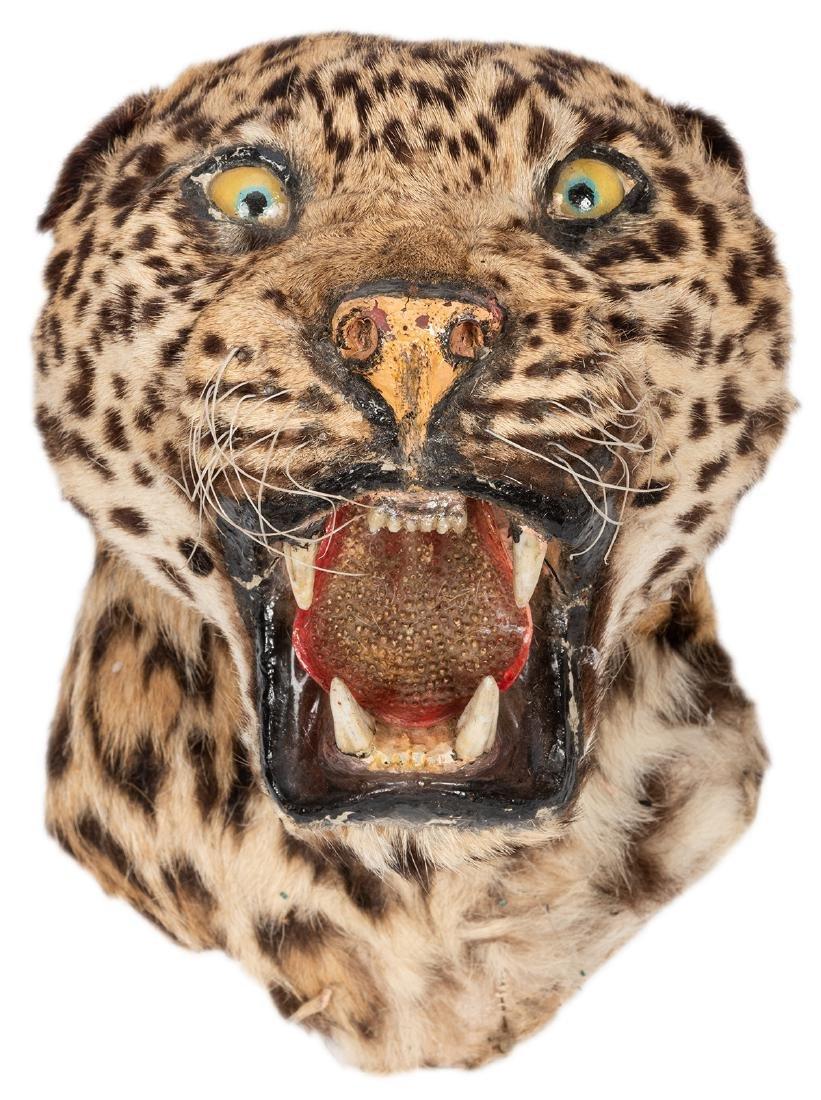 Taxidermy Leopard Head.