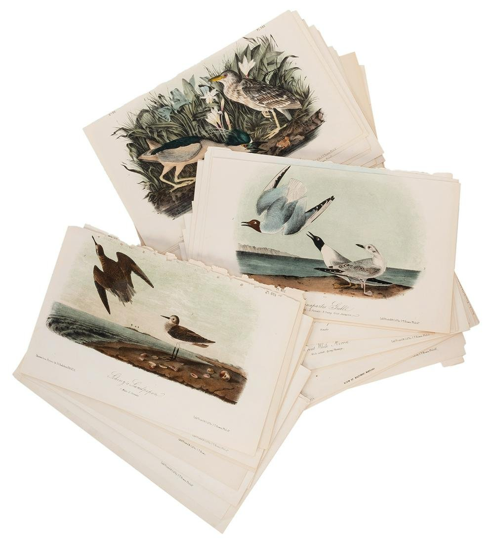 Group of 69 Lithographs from the Birds of America.