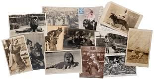 Group of 15 Big Cat Trainer Circus Postcards. Circa