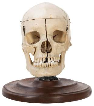 Articulated Human Skull. For medical purposes, mounted