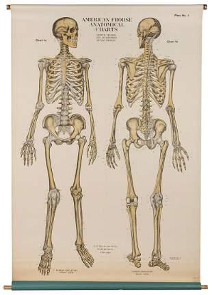 BRODEL, Max. Human Skeleton Anatomical Chart. Chicago: