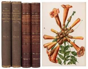 MEEHAN, Thomas (1826–1901). The Native Flowers