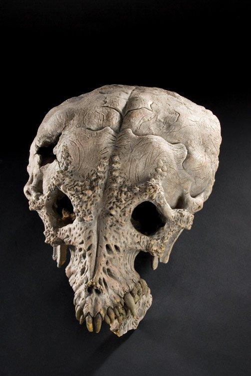 1134: Trophy case skulls from Predator 2 - 3