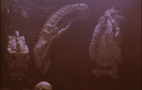 1134: Trophy case skulls from Predator 2 - 6