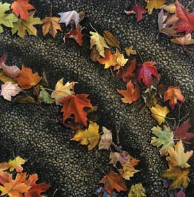 710: Autumn Leaves