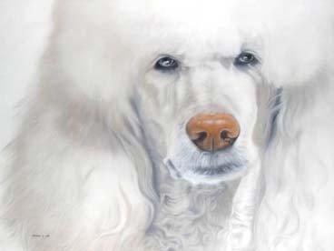 1016: Utomo s White beauty